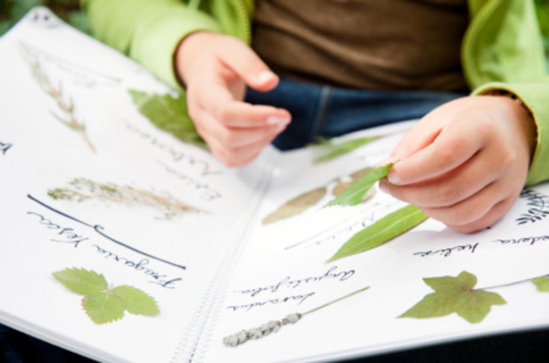 Come Costruire Un Erbario alberi e foglie dal mondo: facciamo l'erbario! - trentino