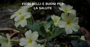 Fiori Belli.Fiori Belli E Buoni Per La Salute Trentino Cultura